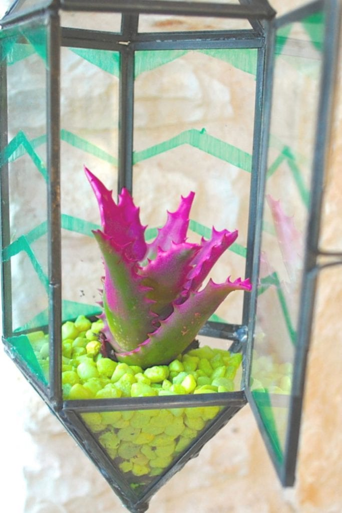 Terrarium made from a hanging candle holder by Jennifer Perkins