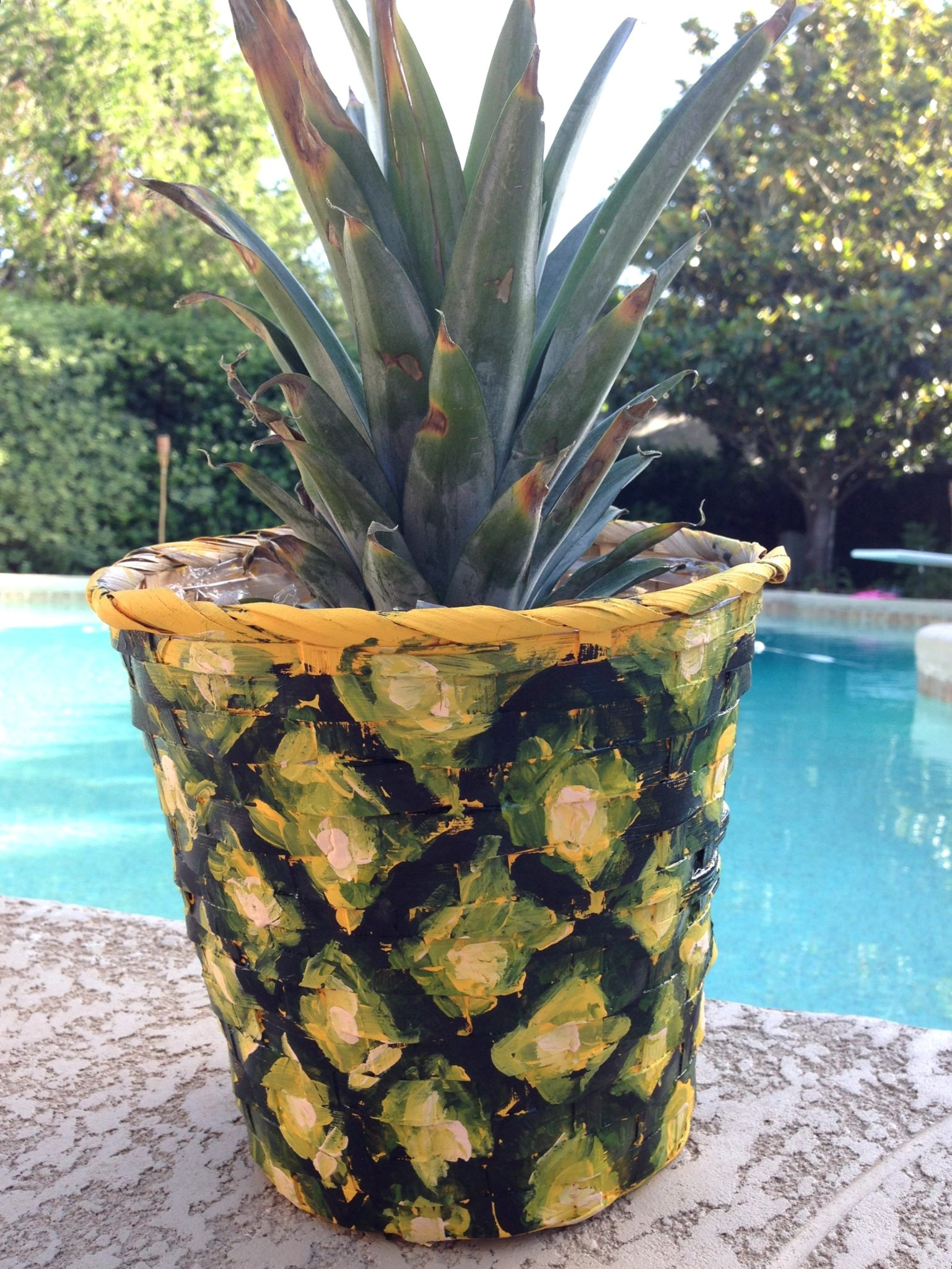 How to plant a pineapple and make a matching planter for How do i plant a pineapple top