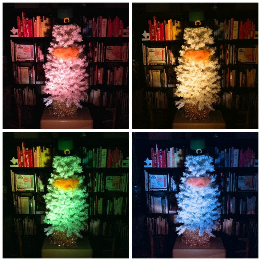color-wheel-rainbowtree