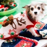 How to make an Ugly Christmas Sweater for your dog.
