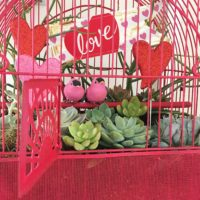 Make a birdcage into a planter.