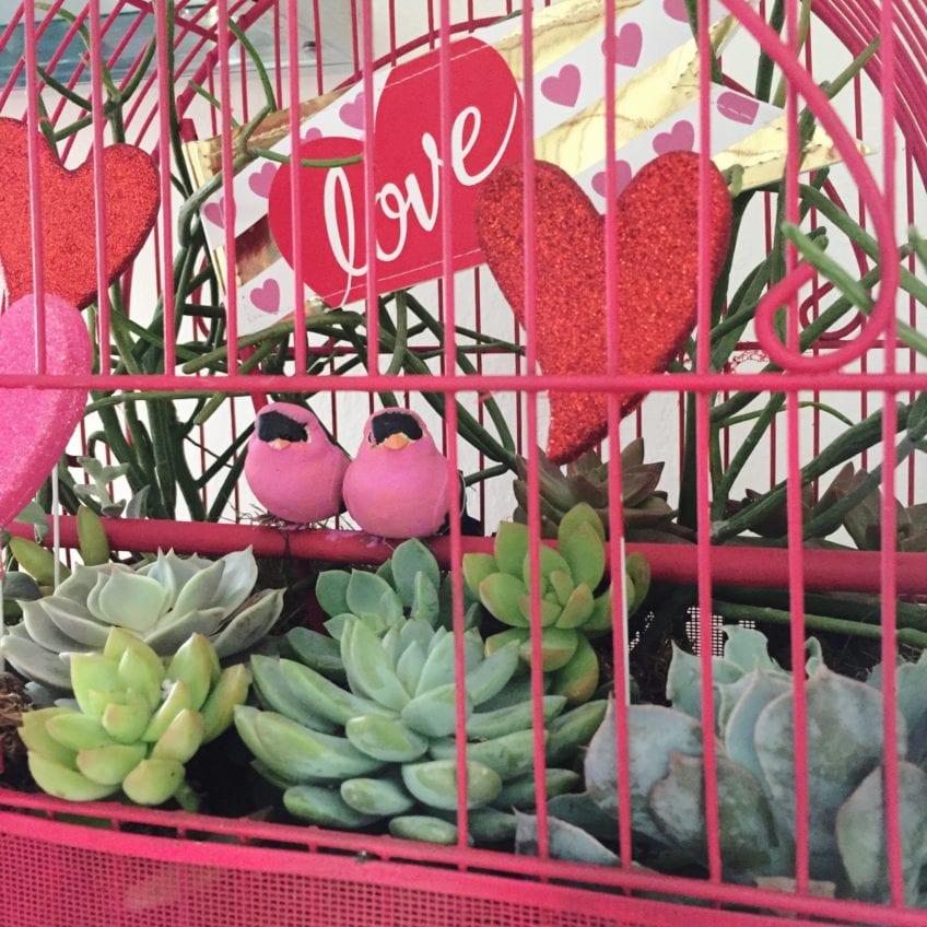 How to make a lovebirds planter.