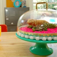 How to turn a cake stand into a DIY terrarium by Jennifer Perkins